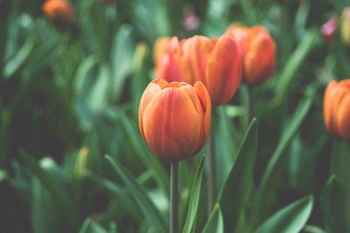 Jackies Flowers